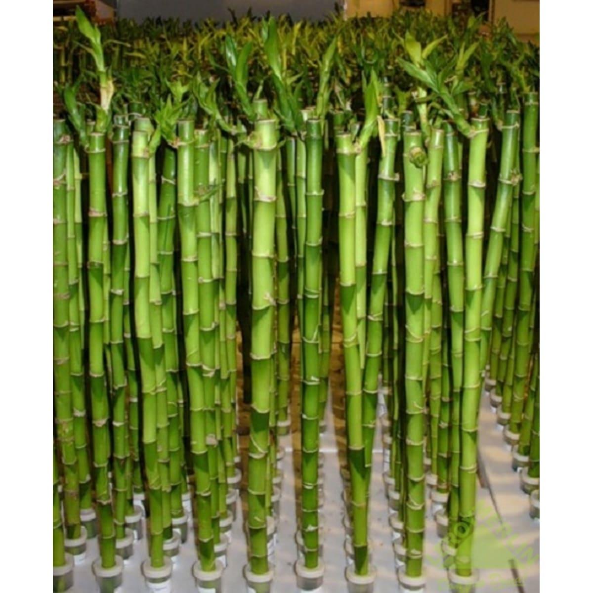 Бамбук Лаки (прямой) 3х40 см