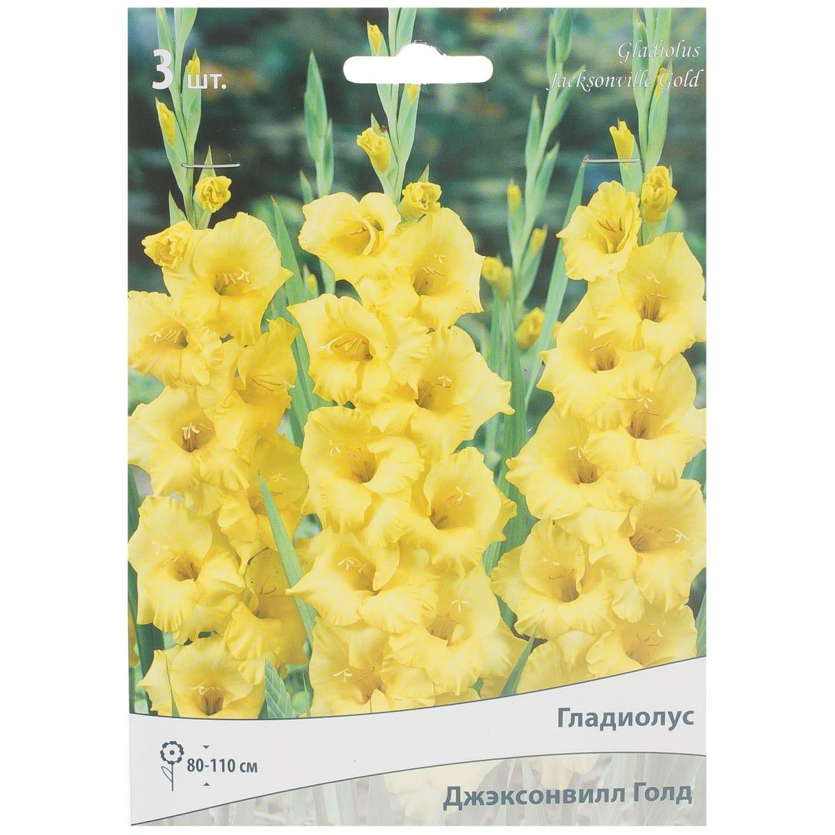 Гладиолус крупноцветковой «Джэксонвилл голд»