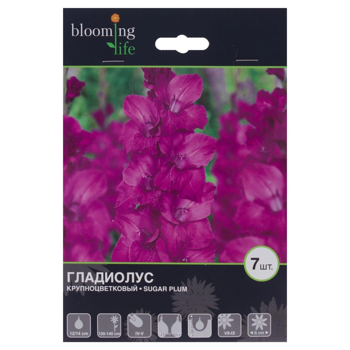 Гладиолус крупноцветковый «Шуга Плум»