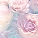 Фотообои флизелиновые «Крупные розы» 200х200 см