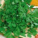 Семена Кориандр овощной «Прелесть»