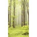 Комплект панелей ПВХ Сказочный лес 8 мм 2700x375 мм 4.05 м² 4 шт