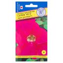 Петуния грандифлора «Игл» F1, цвет ярко-розовый