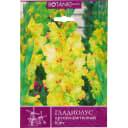 Гладиолус крупноцветковый «Киев»