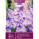 Гладиолус крупноцветковый «Одесса»