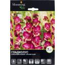 Гладиолус крупноцветковый «Колор Клаб»