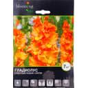 Гладиолус крупноцветковый «Липецк»