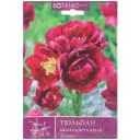 Тюльпан многоцветковый «Тезайе»
