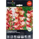 Гладиолус крупноцветковый «Сорпреса»