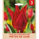 Тюльпан «Peter De Leur» размер луковицы 10/11, 3 шт.