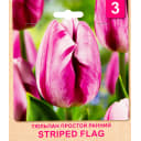 Тюльпан «Striped Flag» размер луковицы 10/11, 3 шт.