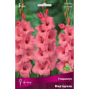Гладиолус крупноцветковый «Фортароза»