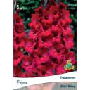 Гладиолусы крупноцветковые Фёст Блад