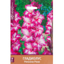 Гладиолус крупноцветковый «Реполло Рохо»