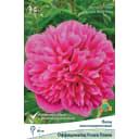 Пион молочноцветковый травянистый «Оффициналис Розеа Плена» разбор 1-2
