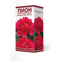 Пион молочноцветковый травянистый «Генерал Мак-Магон» разбор 2-3