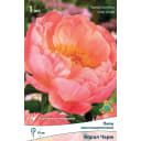 Пион молочноцветковый травянистый «Корал Чарм» разбор 1-2