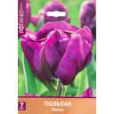 Тюльпан «Питон» размер луковицы 11/12, 7 шт.