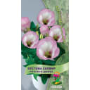 Семена Эустома Сапфир «Розовая дымка»