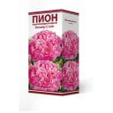 Пион травянистый Эмпайр Стейт луковица 2-3