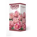 Пион травянистый Мисс Экхарт луковица 2-3