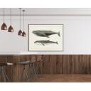 Постер Просто Постер Горбатый кит и северный малый полосатик 60х90 см