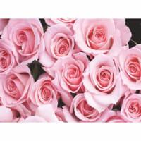 Фотообои бумажные «Нежность» 280х200 cм