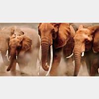 Фотообои флизелиновые «Слоны» 200х370 cм