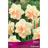 Нарцисс махровый «Рози Клауд», высота 40 см, 3 шт.