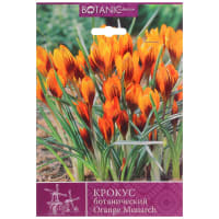 Крокус ботанический «Оранж Монарх»