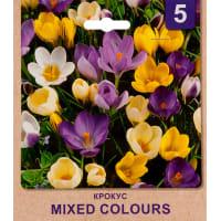 Крокус «Mixed Colours» размер луковицы 5/7, 5 шт.