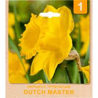 Нарцисс «Dutch Master» размер луковицы 10/12, 6 шт.