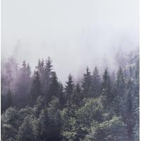 Картина на холсте «Туманный лес» 30x30 см