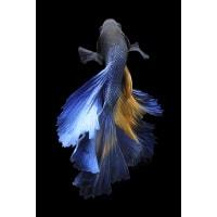 Картина на стекле «Рыба» 40х60 см