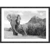 "Картина в раме ""Слоны"" 50х70 см"