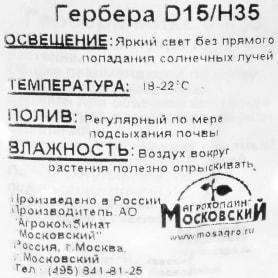 Гербера 15х35 см