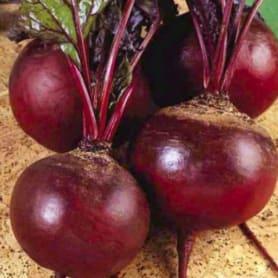 Семена Свёкла «Детройт»