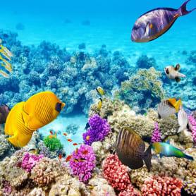 Фотообои флизелиновые «Подводный мир» 200х200 см