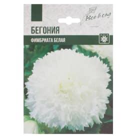 Бегония «Фимбриата», цвет белый
