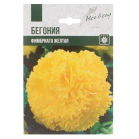Бегония «Фимбриата», цвет жёлтый