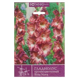 Гладиолус крупноцветковый «Боса Нова»