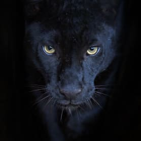 Картина на стекле «Элегант пантера» 40х40 см