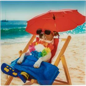 Картина на стекле «Собака на пляже» 30х30 см