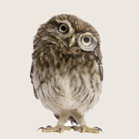 Картина на стекле «Мудрая сова» 40x40 см