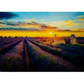 Картина на стекле «Лавандовые поля» 50x70 см