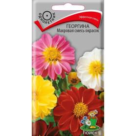Семена Георгина «Махровая» смесь окрасок