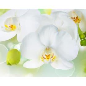 Фотообои Divino Decor Белая орхидея C-379 300х238 см