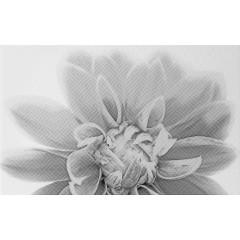 Плитка керамическая Unitile LIFE Камелия черный декор 03 250х400 мм