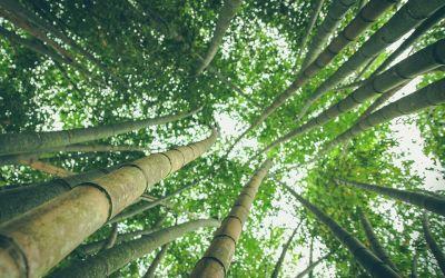 7 nachhaltige vegane Textilien, die Du kennen solltest