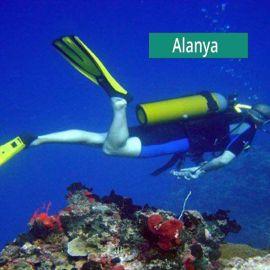 Scuba Dive or Snorkel